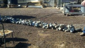 We spent the day getting decoys ready for the season.